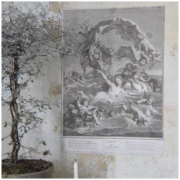 Poster med Venus - klassisk motiv