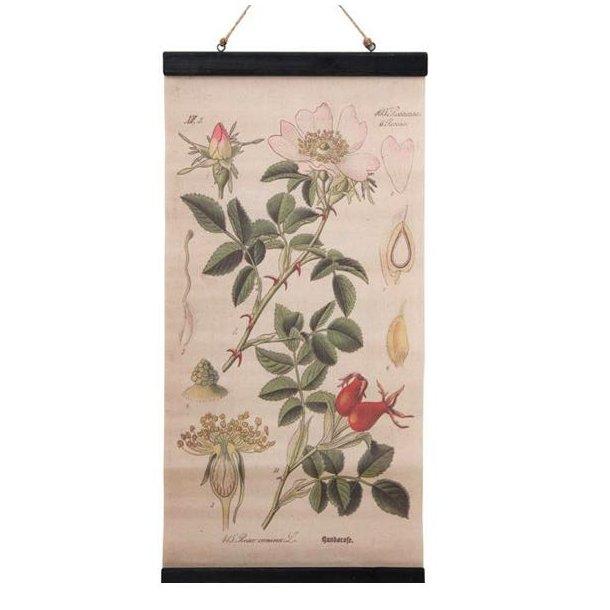 Plakat til ophæng med botanisk motiv - planche